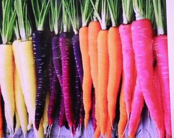 Heirloom Danvers, Tendersweet, Scarlet Nantes Rainbow Carrot Seeds GMO Free