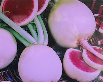 Heirloom GMO Free Watermelon Radish Seeds  125 - 500 seeds