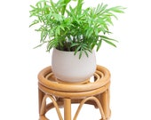 Mini Unique Bamboo Plant Stand, Rattan Plant Stand Fits Indoor Plants, Modern Plant Stand with Wood Grain for Indoor Outdoor Home Decor