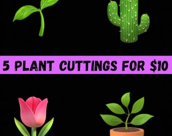 Houseplant MYSTERY Box • 5 Cuttings • Free Shipping!