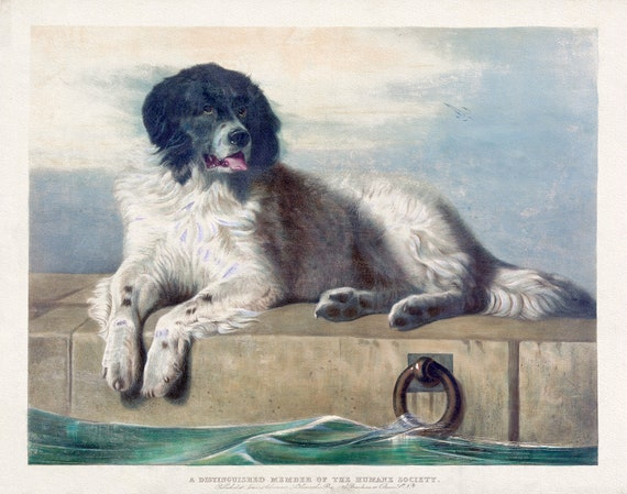 Ackermann, A distinguished member of the Humane Society, 1860