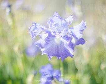 """Photography Fleur d'Iris """"Fleur d'Âme"""""""", Nature, Fine Art Art Print Glossy Paper for Decoration"""