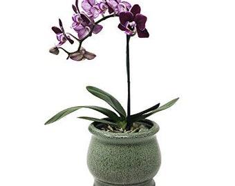 Premium Succulent Planter Orchid Pot Ceramic with Decorative Patina Glaze