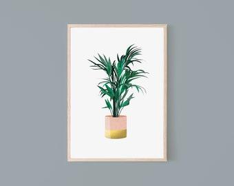 Original colour pencil  drawing of a Kentia Palm