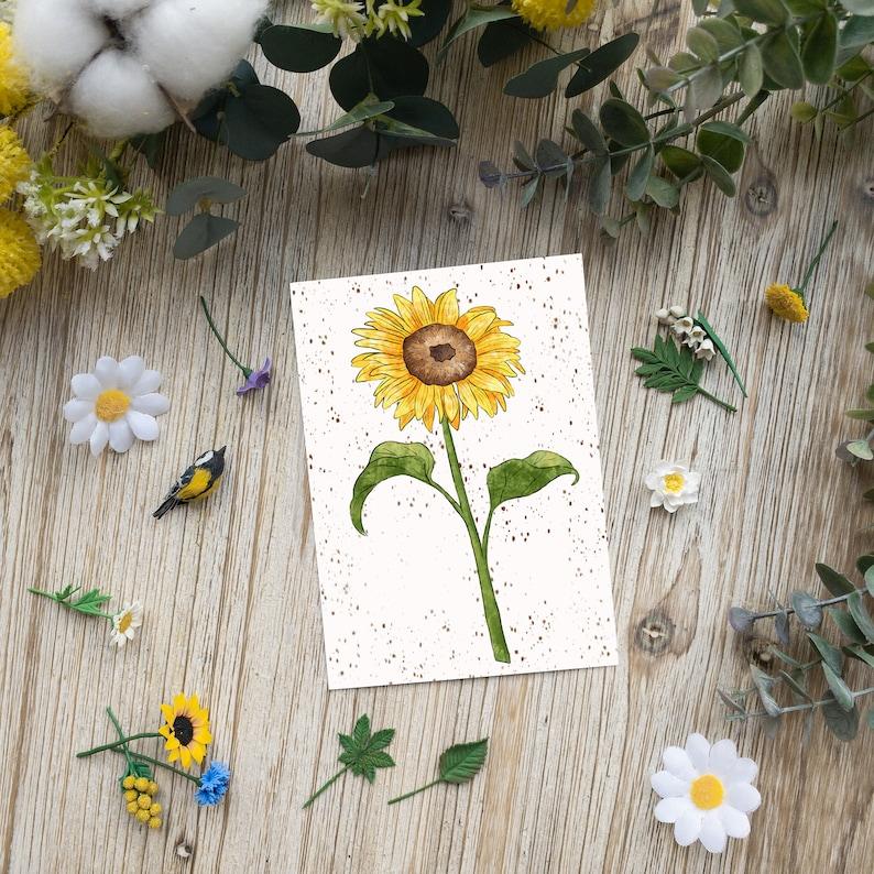Sunflower  Sunflower  postcard  seasonal  spring  image 0