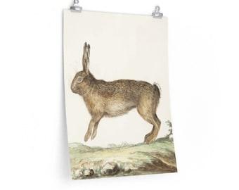 Old English Hare Hunt Prints Vintage British Wildlife Illustrations Hog /& Rabbit Hunting Wall Art Set of Two