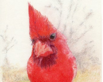 signed by artist Northern Cardinal with Bowler high-quality 8x10 gicl\u00e9e fine art print No.15