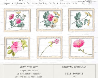 Touch of Pink Specimen Cards | Digital Cards | Vintage | Ephemera | Tags | Cards