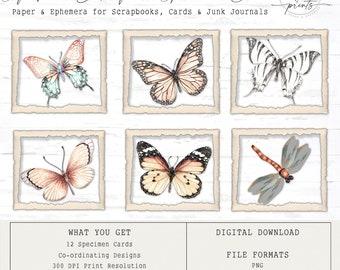 Soft Pink Butterfly Specimen Cards | Digital Cards | Vintage | Ephemera | Tags | Cards