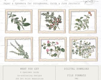 Vintage Botanical Specimen Cards | Digital Cards | Vintage | Ephemera | Tags | Cards