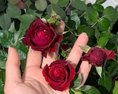 Dark Red Climbing Rose Live Plant, Red Color Climber Garden Rose Bush Stater Plant