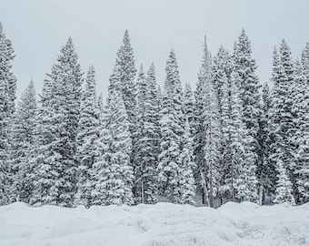 Landscape Fine Art Photography, Winter Wonderland, Trees