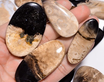 Natural Petrified Palm Root Fossil Smooth Cabochon Loose Gemstones Loose semi precious  Petrified Palm Jewelry 156Cts.60X58MM