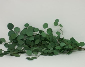Preserved Washed Silver Dollar Eucalyptus-- wedding decor, variety of colors, preserved greens