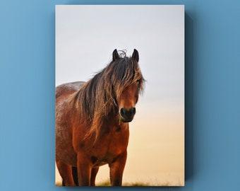 Dartmoor Stallion ~ A3 Print ~ Original Photography, Photos, Horses, Pony, Ponies, Nature, Wildlife, Countryside, Devon, Gifts, Equine, Art