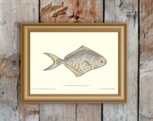 Fish print, 1876, Les Poissons, Stromatée, Butterfish, Gervais, wall art, fishing lodge, country house, framing