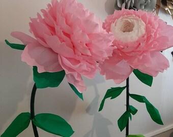 Peony flower on base
