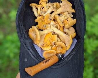 FRESH Chanterelle Mushroom  Wild-Foraged clean premium grade