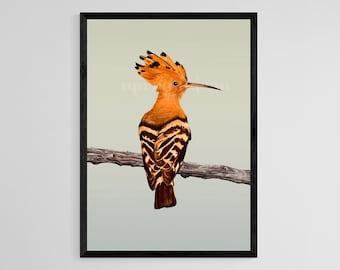 Hoopoe Digital Painting