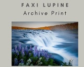 Faxi Lupine - Archival Matte Print