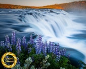 Faxi Waterfall Lupine, Iceland Landscape Photo Print  - Collectable Wall Art, Museum Grade Paper