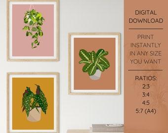 Set of 3 Plant Illustrations - Begonia, Maranta, Philodendron