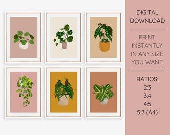 Set of 6 Plant Illustrations - Pilea, Begonia, Monstera, Maranta, Alocasia, Philodendron