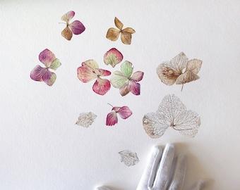 Winter Hydrangea. giclée Art print Painting Botanical Art Watercolour Painting Illustration Fine Art Decorative wall Realistic style
