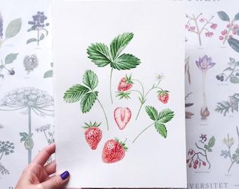 ORIGINAL ART - Strawberry Illustration, Berries, Botanical illustration, Botanical Art, Watercolour Painting, Home decor, Home decor,