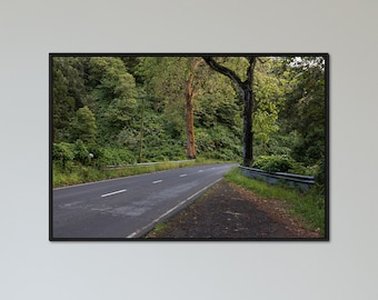 Rainforest - Landscape Photography Fine Art Print