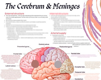 The Cerebrum and Meninges Study Sheet