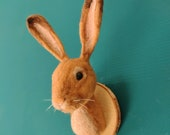 Vegan needle felted bunny head faux taxidermy, cottage core decor, dark academia