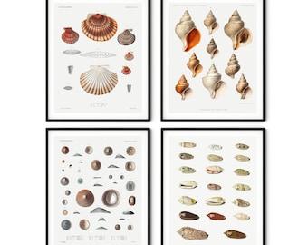 Vintage Seashell Prints Set of 4 - Seashell Wall Art, Nautical Decor, Beach House Decor, Nautical Prints, Beach Cottage Decor, Coastal Print