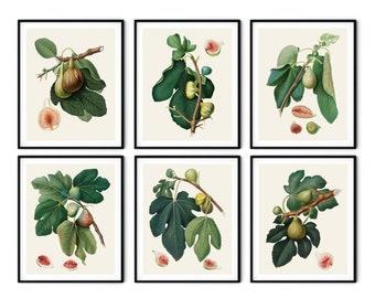 Italian Figs Prints Set of 6 - Botanical Print Set, Kitchen Wall Art, Redoute Fruit Prints, Kitchen Art Prints, Botanical Art, Kitchen Art