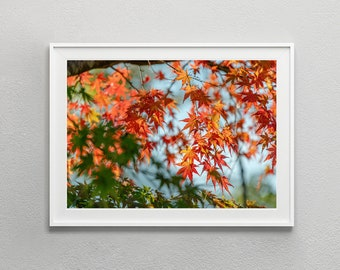 Japanese Red Maple Tree | Japan Photo Download | Photo Poster Asia Photography | Digital Print Wall Art