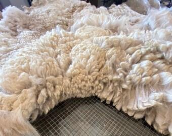 Raw Alpaca Fiber ~ Aramis ~ White 2021 Fleece
