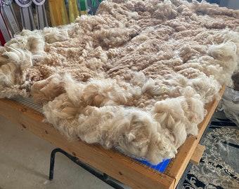 Raw Alpaca Fiber ~ Light Fawn ~ 2021 Whole Fleece