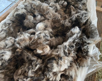 Raw Alpaca Fiber ~ Gray ~ 2021 Whole Fleece