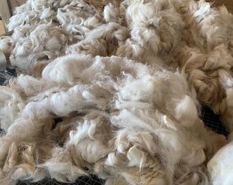 Raw White Alpaca Fleece ~ 2021 White