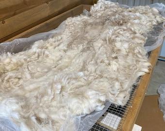 Raw Alpaca Fiber ~ Athos 2020 ~ White