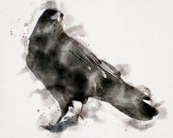 CROW Watercolor, Crow Art, Horizontal Bird Art, Horizontal Watercolor Print, Crow Painting, Crow Bird, Crow Wall Art, Crow or Raven, 8x10