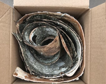 6x6x6 Box of Birch Bark