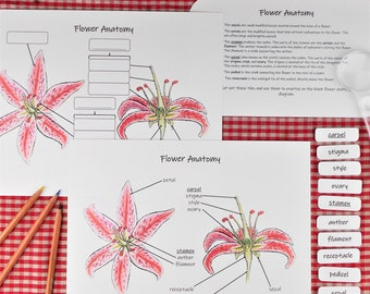 Flower Anatomy Unit Pack: kids' science activities and posters