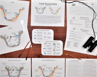 Pond Ecosystem Pack: science activities and worksheets - classroom and field trip!