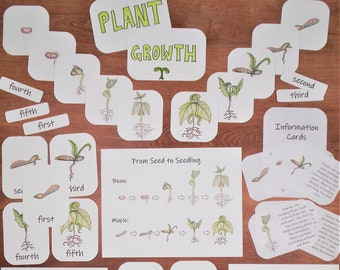 Plant Growth Unit Pack: science classroom posters, Montessori-inspired flashcards
