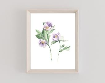 Watercolor Print | Hellbore | Floral | Botanical