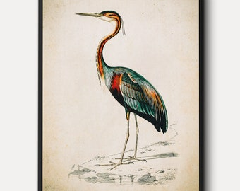 Heron WALL ART - Large Bird Canvas, Vintage Animal Print, Nature Wall Decor, Animal Portrait Painting, Antique Lithograph, Framed/Unframed