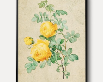 Yellow Rose of Sulfur WALL ART - Flowers Canvas, Vintage Plants Print, Nature Wall Decor Painting, Antique Lithograph Art, Framed/Unframed