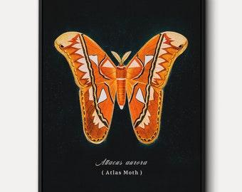 Atlas Moth WALL ART - Entomology Canvas Art, Attacus Atlas Moth Illustration, Hand-colored Original Antique Butterfly Print, Unique Decor