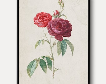 French Rose WALL ART - Large Flowers Canvas, Vintage Plants Print, Nature Wall Decor Painting, Red Rose Antique Lithograph, Framed/Unframed